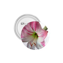 Flower Blossom Bloom Amaryllis 1 75  Buttons by Nexatart