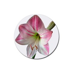 Flower Blossom Bloom Amaryllis Rubber Round Coaster (4 Pack)
