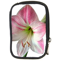 Flower Blossom Bloom Amaryllis Compact Camera Cases by Nexatart