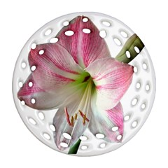 Flower Blossom Bloom Amaryllis Round Filigree Ornament (two Sides) by Nexatart