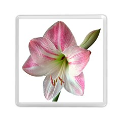 Flower Blossom Bloom Amaryllis Memory Card Reader (square)  by Nexatart