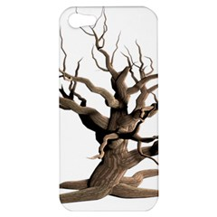 Tree Isolated Dead Plant Weathered Apple Iphone 5 Hardshell Case