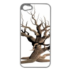 Tree Isolated Dead Plant Weathered Apple Iphone 5 Case (silver) by Nexatart