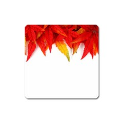 Abstract Autumn Background Bright Square Magnet by Nexatart