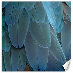Feather Plumage Blue Parrot Canvas 20  X 20   by Nexatart