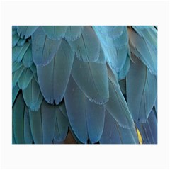 Feather Plumage Blue Parrot Small Glasses Cloth (2 Side) by Nexatart