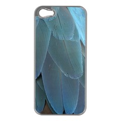 Feather Plumage Blue Parrot Apple Iphone 5 Case (silver) by Nexatart