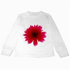 Flower Isolated Transparent Blossom Kids Long Sleeve T Shirts by Nexatart