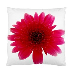 Flower Isolated Transparent Blossom Standard Cushion Case (one Side) by Nexatart