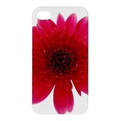 Flower Isolated Transparent Blossom Apple Iphone 4/4s Premium Hardshell Case