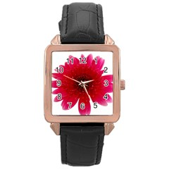 Flower Isolated Transparent Blossom Rose Gold Leather Watch