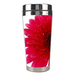 Flower Isolated Transparent Blossom Stainless Steel Travel Tumblers by Nexatart