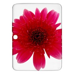 Flower Isolated Transparent Blossom Samsung Galaxy Tab 3 (10 1 ) P5200 Hardshell Case  by Nexatart