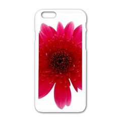 Flower Isolated Transparent Blossom Apple Iphone 6/6s White Enamel Case by Nexatart