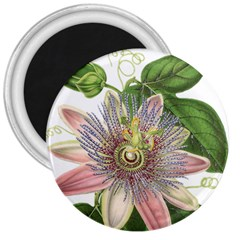 Passion Flower Flower Plant Blossom 3  Magnets