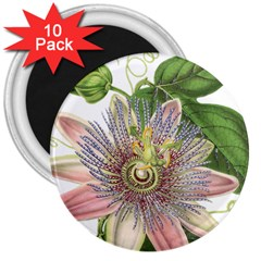 Passion Flower Flower Plant Blossom 3  Magnets (10 Pack)  by Nexatart