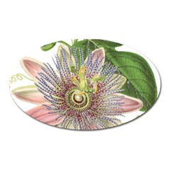 Passion Flower Flower Plant Blossom Oval Magnet by Nexatart