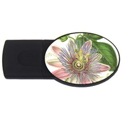 Passion Flower Flower Plant Blossom Usb Flash Drive Oval (2 Gb)