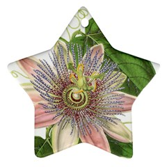 Passion Flower Flower Plant Blossom Star Ornament (two Sides)