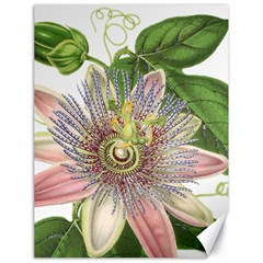 Passion Flower Flower Plant Blossom Canvas 18  X 24
