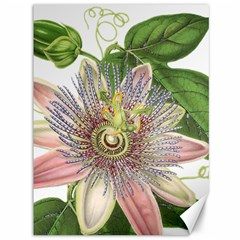 Passion Flower Flower Plant Blossom Canvas 36  X 48
