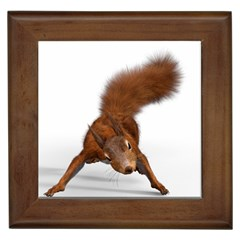 Squirrel Wild Animal Animal World Framed Tiles by Nexatart
