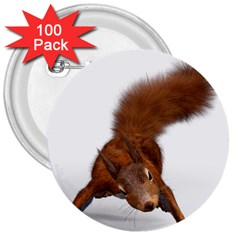 Squirrel Wild Animal Animal World 3  Buttons (100 Pack)  by Nexatart