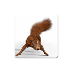 Squirrel Wild Animal Animal World Square Magnet