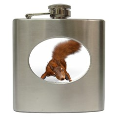 Squirrel Wild Animal Animal World Hip Flask (6 Oz) by Nexatart