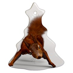 Squirrel Wild Animal Animal World Ornament (christmas Tree)  by Nexatart