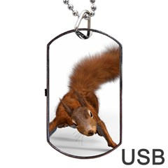 Squirrel Wild Animal Animal World Dog Tag Usb Flash (two Sides) by Nexatart