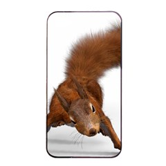 Squirrel Wild Animal Animal World Apple Iphone 4/4s Seamless Case (black) by Nexatart