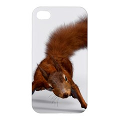 Squirrel Wild Animal Animal World Apple Iphone 4/4s Premium Hardshell Case by Nexatart