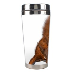 Squirrel Wild Animal Animal World Stainless Steel Travel Tumblers by Nexatart