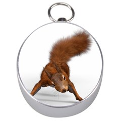 Squirrel Wild Animal Animal World Silver Compasses