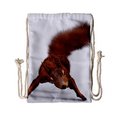 Squirrel Wild Animal Animal World Drawstring Bag (small) by Nexatart