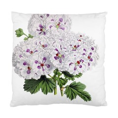 Flower Plant Blossom Bloom Vintage Standard Cushion Case (one Side) by Nexatart