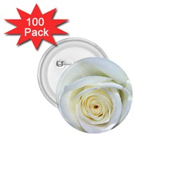 Flower White Rose Lying 1 75  Buttons (100 Pack)