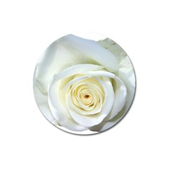 Flower White Rose Lying Magnet 3  (round) by Nexatart
