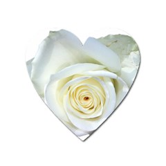Flower White Rose Lying Heart Magnet by Nexatart