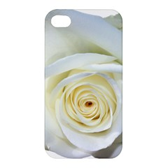 Flower White Rose Lying Apple Iphone 4/4s Premium Hardshell Case