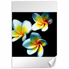 Flowers Black White Bunch Floral Canvas 20  X 30   by Nexatart
