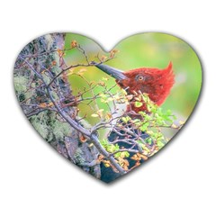 Woodpecker At Forest Pecking Tree, Patagonia, Argentina Heart Mousepads by dflcprints