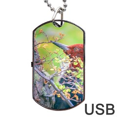 Woodpecker At Forest Pecking Tree, Patagonia, Argentina Dog Tag Usb Flash (one Side) by dflcprints