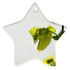 Leaves Nature Star Ornament (two Sides)