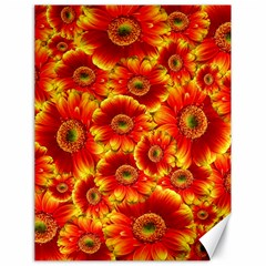 Gerbera Flowers Nature Plant Canvas 18  X 24   by Nexatart