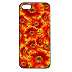 Gerbera Flowers Nature Plant Apple Iphone 5 Seamless Case (black)