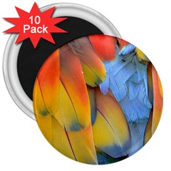 Spring Parrot Parrot Feathers Ara 3  Magnets (10 Pack)  by Nexatart
