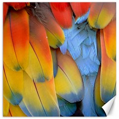 Spring Parrot Parrot Feathers Ara Canvas 20  X 20   by Nexatart
