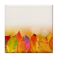 Autumn Leaves Colorful Fall Foliage Tile Coasters by Nexatart